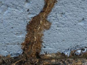 Deland Pest Control